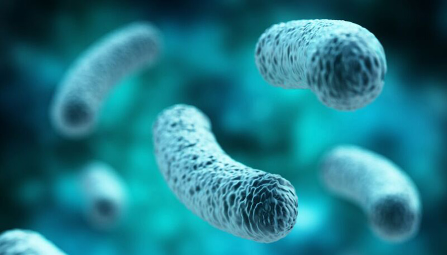 Close-up of a bacteria