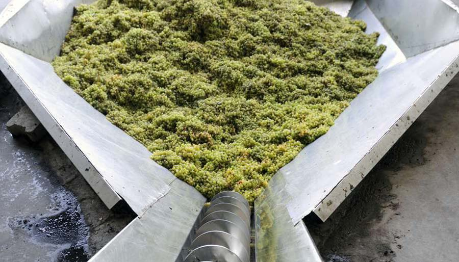 Grapes being processed