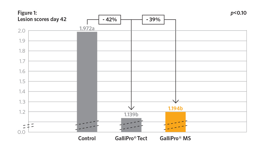 GALLIPRO® MS Broilers Graph