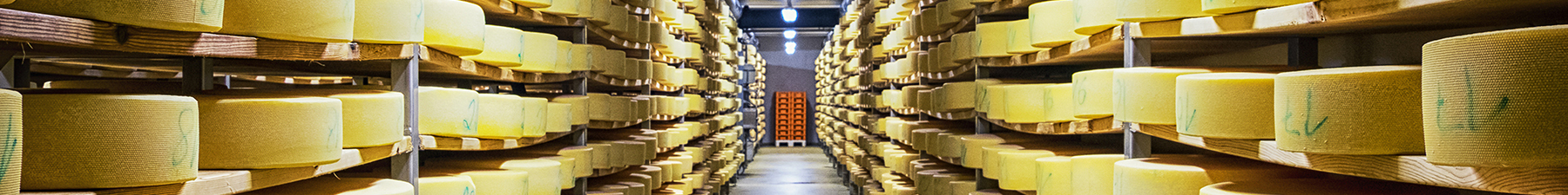 Round cheeses in warehouse