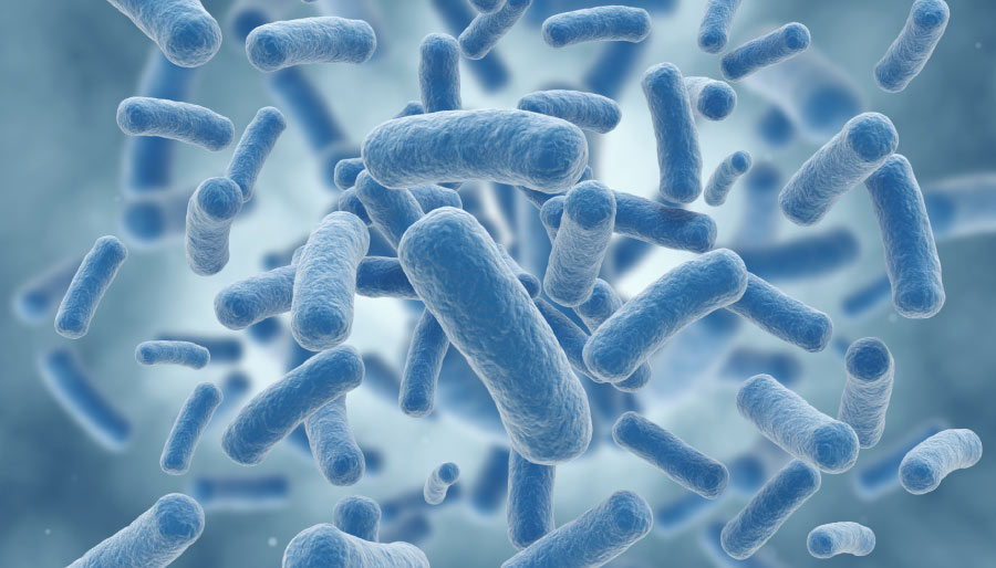Microscopic closeup of bacteria organisms